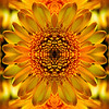 Symmetric Sunflower