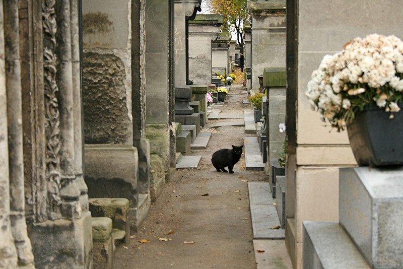 """Chat Noir""<br /> Cemetary - Montmartre"