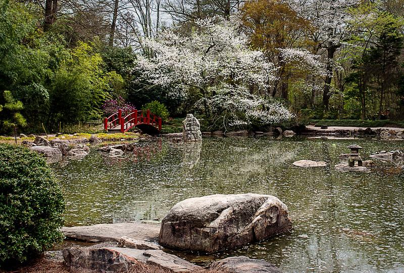 Japanese Bridge at Birmingham Botanical Gardens.