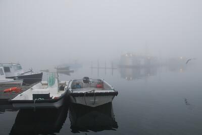 Machias Seal Island Trip - 008