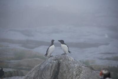 Machias Seal Island Trip - 027