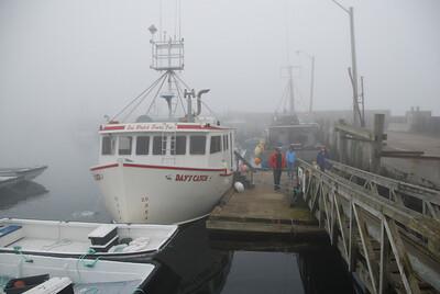 Machias Seal Island Trip - 004