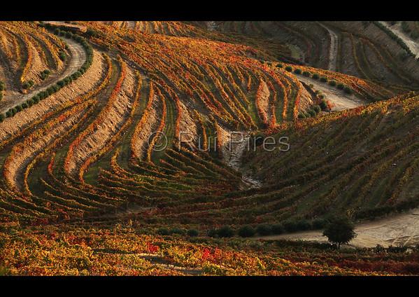 Douro River Valley RPDV_10017