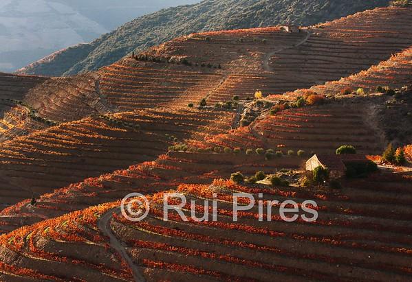 Douro River Valley RPDV_10001