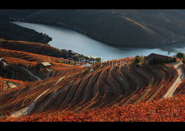 Douro River Valley RPDV_10012