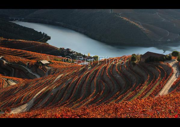 Douro River Valley RPDV_10012