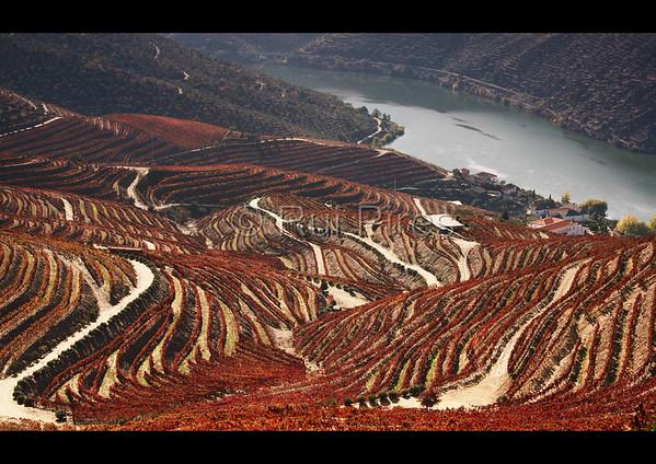 Douro River Valley RPDV_10014