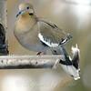 Bird Winter Accessory