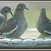 Rub-a-Dub-Dub, 3 Doves in the Tub