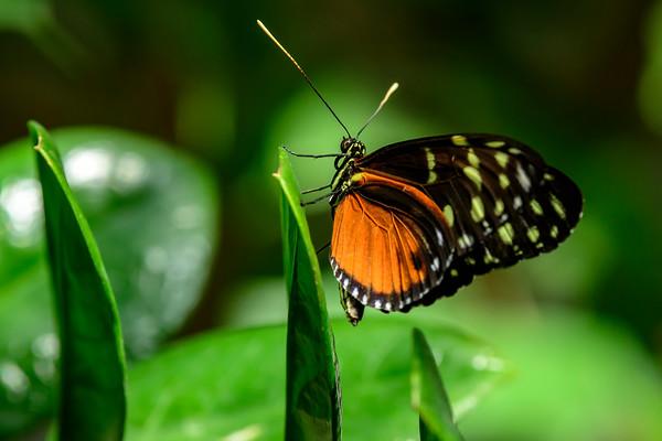 Dow Gardens butterflies