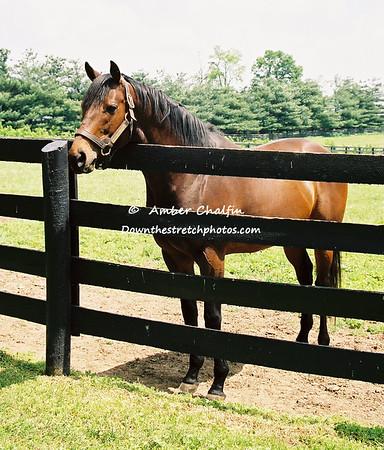 N - Z Stallions