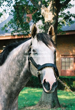 A- M  Stallions