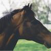 cigar KY horse Park 5-2003