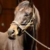 WINSTAR FARM   Stallion Open House