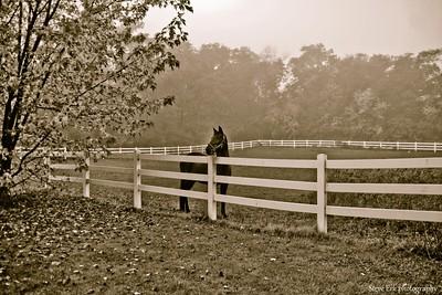 Foggy Fall morning
