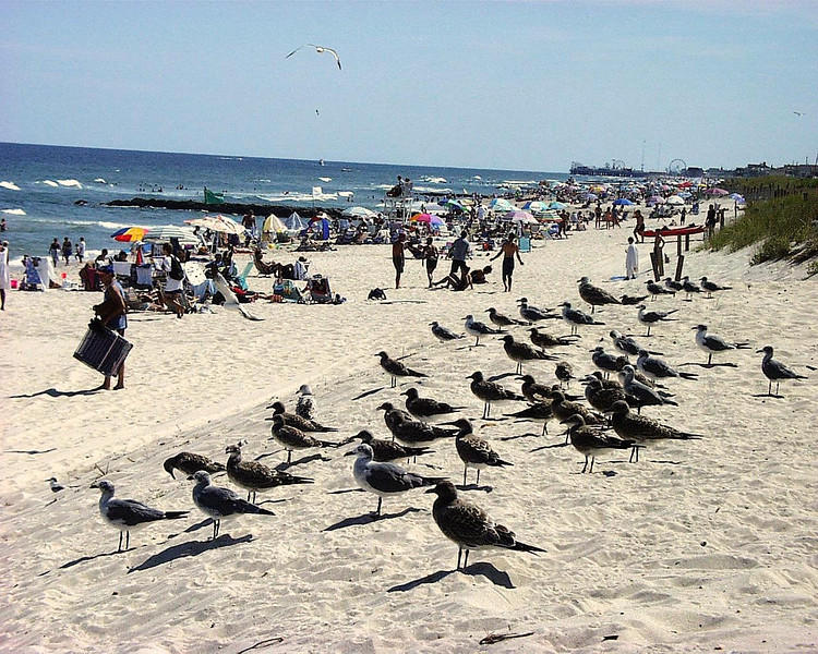 Birds Day Off, OB 1
