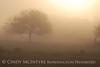Fog, Joe Overstreet Rd , Lk Kissimmee FL (19)