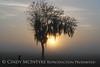 Fog, Joe Overstreet Rd , Lk Kissimmee FL (5)