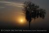 Fog, Joe Overstreet Rd , Lk Kissimmee FL (3)