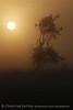 Fog, Joe Overstreet Rd , Lk Kissimmee FL (12)