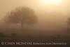 Fog, Joe Overstreet Rd , Lk Kissimmee FL (18)