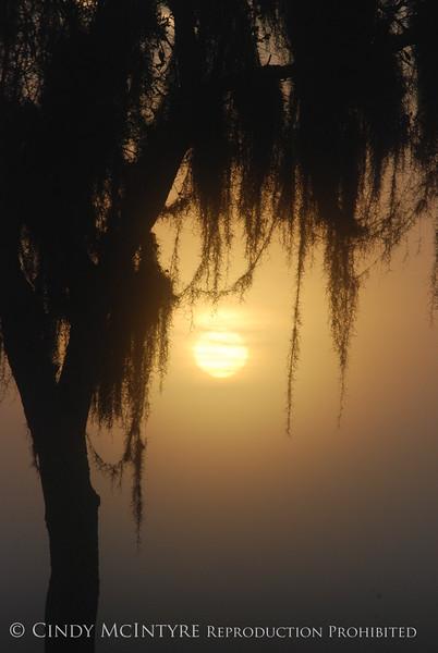 Fog, Joe Overstreet Rd , Lk Kissimmee FL (8)