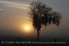 Fog, Joe Overstreet Rd , Lk Kissimmee FL (4)