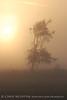 Fog, Joe Overstreet Rd , Lk Kissimmee FL (11)