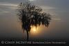 Fog, Joe Overstreet Rd , Lk Kissimmee FL (6)