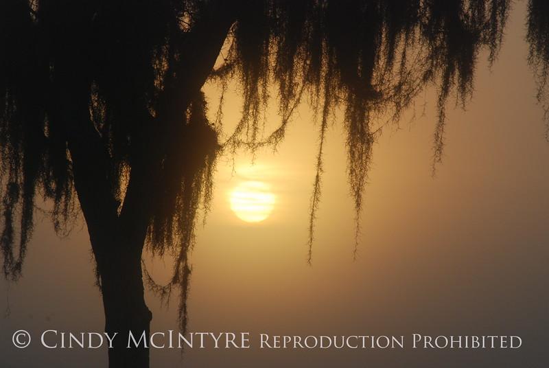 Fog, Joe Overstreet Rd , Lk Kissimmee FL (7)