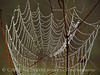 Spider web, Banks Lake NWR, GA (11)