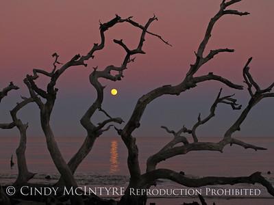 Jekyll Island Sun-Moon
