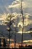 Boardwalk sunset, ONWR (11)