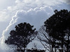 Storm cloud and longleaf pines, ONWR (1)