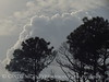 Storm cloud and longleaf pines, ONWR (2)