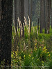 Canal Diggers Trail, Okefenokee NWR GA
