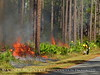 Prescribed Fire, Okefenokee NWR GA (47)