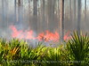 Prescribed Fire, Okefenokee NWR GA