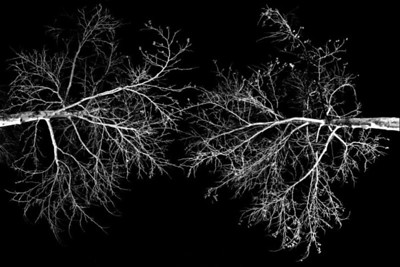Trees in Black
