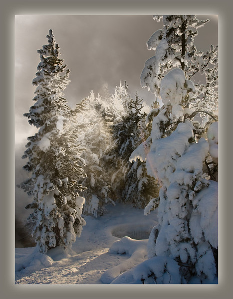 Trees of Cold West Thumb - Minus ten degrees in Yellowstone Park while on a snowmobile adventure.