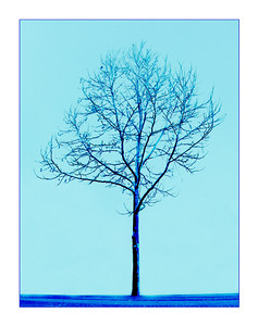 Tree of Blue