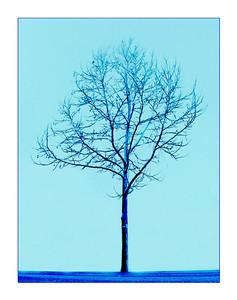 Tree of Blue