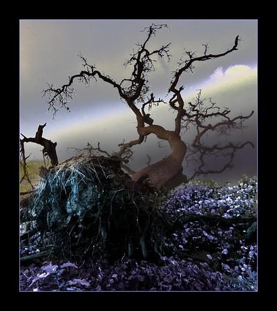 Fallen Oak Impression