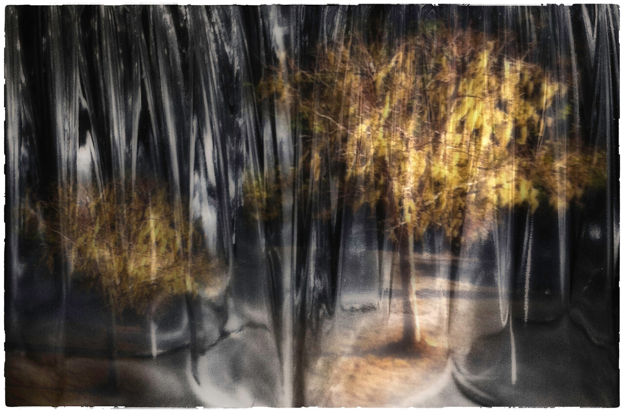 Dream of Trees