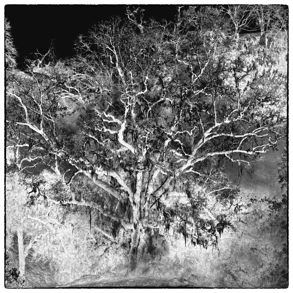 Oak Impression