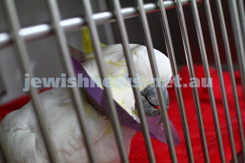 11-2-15. Lort Smith Animal Hospital. Dr Tristan Rich . Photo: Peter Haskin