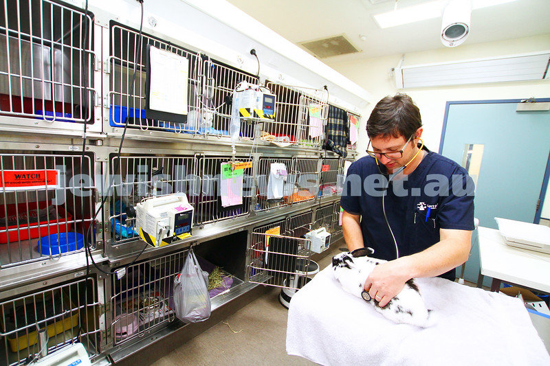"""11-2-15. Lort Smith Animal Hospital. Dr Tristan Rich doing his rounds in the """"post op"""" ward. Photo: Peter Haskin"""