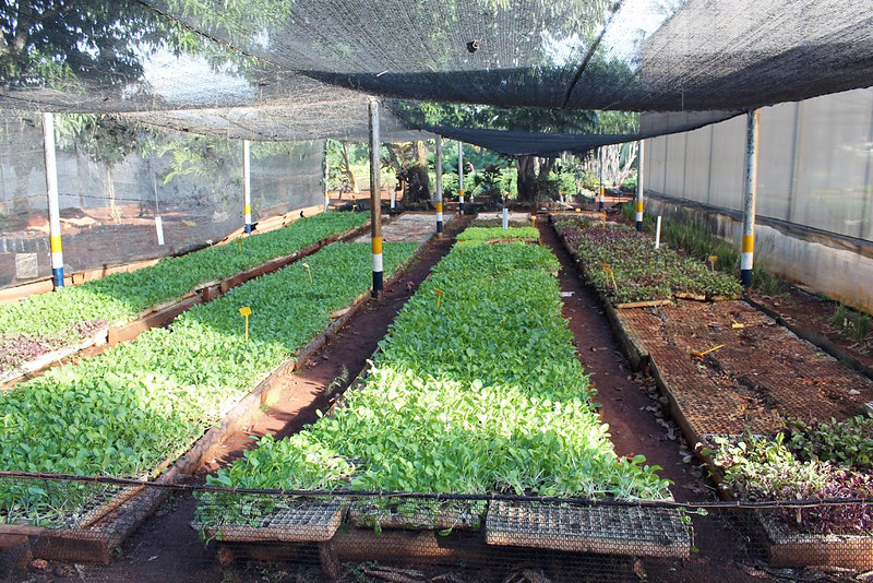 A view of the urban garden where citizens come together to grow food for the community.