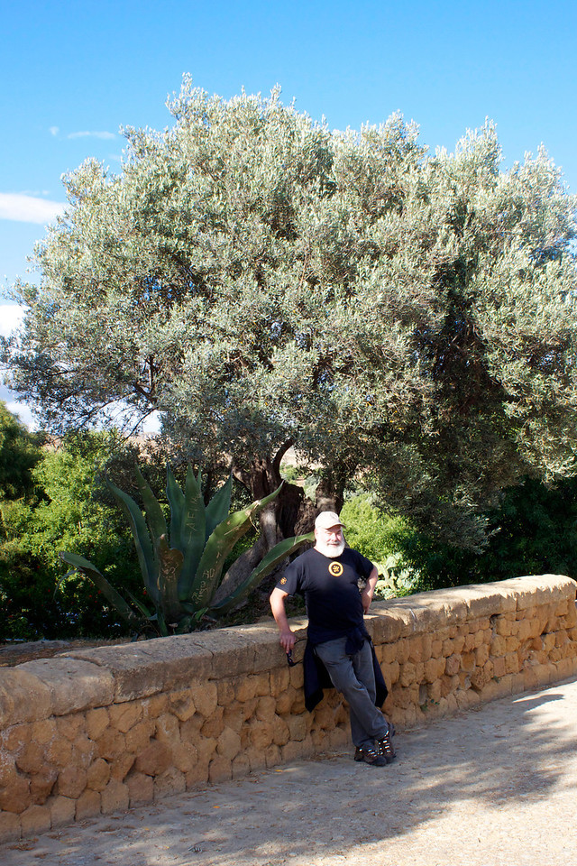 Resting by an olive tree. Some olive trees in the area are well over 100 years old with some trees dating to over 2,000 years ago.
