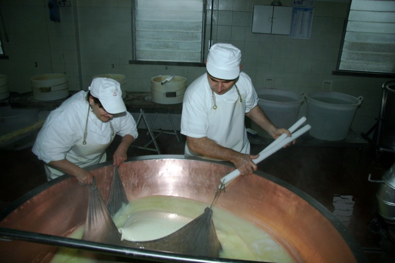 Pulling up the curd. The big curdled milk mass has been wrapped in the cloth, and then will be hung to drain the whey.